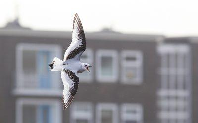 Walcheren 2018 in vogelvlucht …