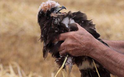 Vogelwerkgroep Walcheren in het nieuws